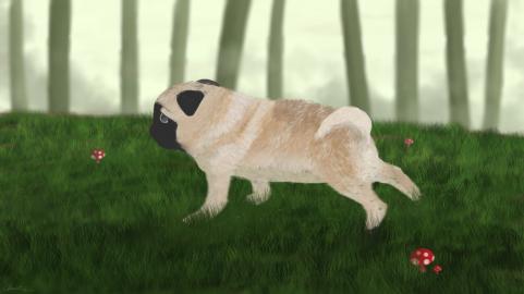 Wandering Pug